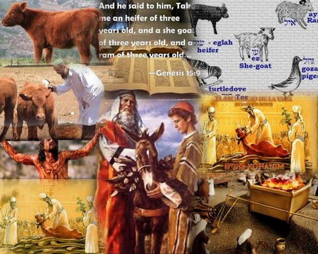 heifer1 Collage (640x512)